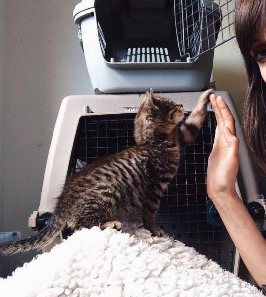 Un chat adopté = deux chats sauvés.