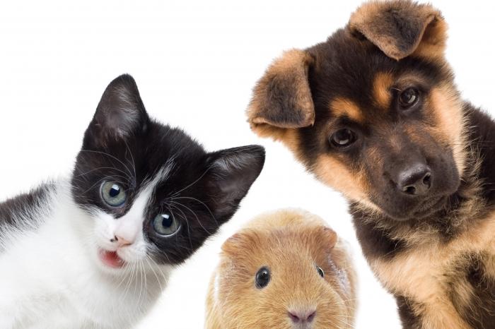 8 questions à se poser avant d'accueillir un animal de compagnie