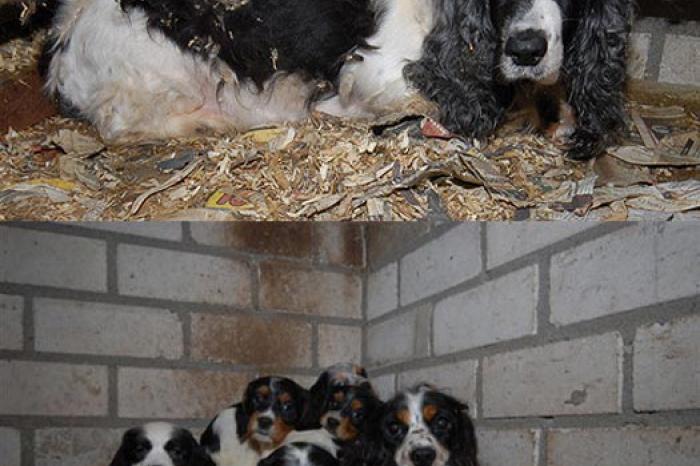 Achter de schermen van een puppykwekerij