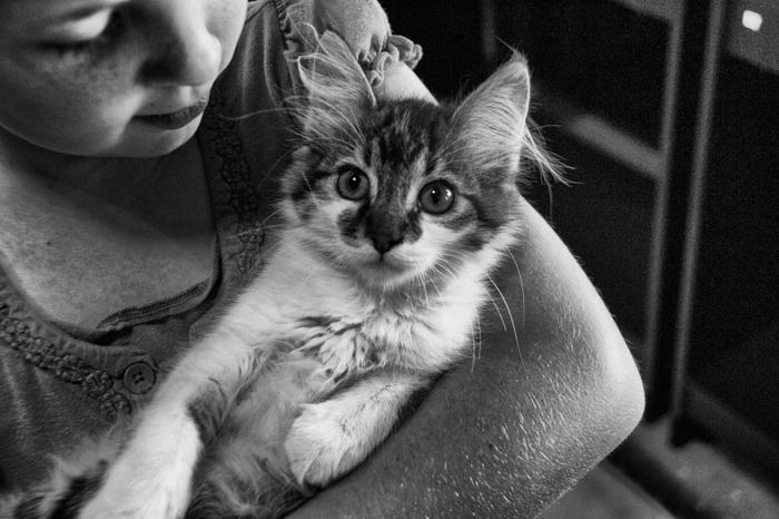 Le chat domestique, quelle est son origine ?