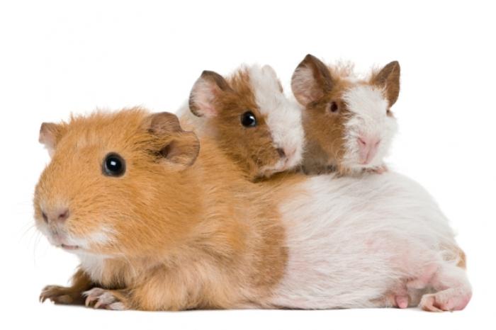 GAIA - in actie voor proefdieren