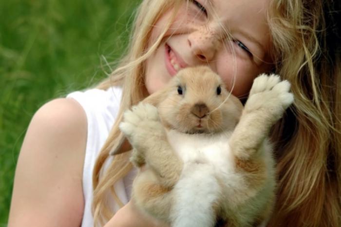 Le lapin de compagnie, un petit animal de plus en plus apprécié !