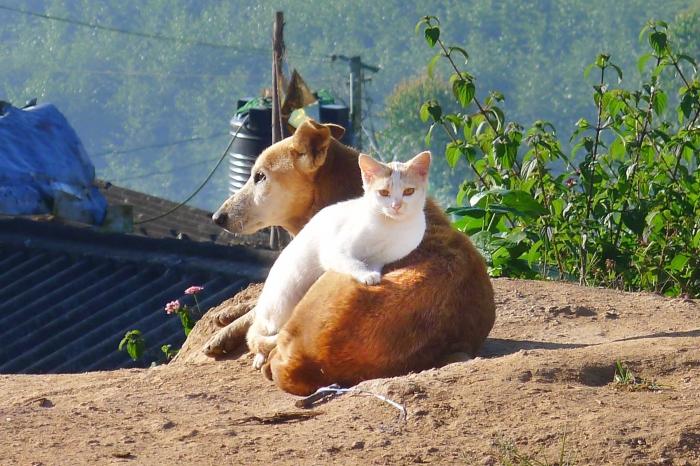 Le village où des animaux sont des personnes