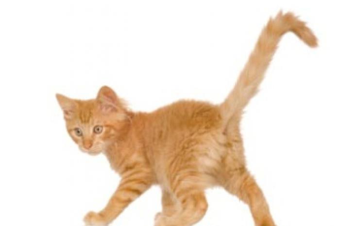De oorsprong van de huiskat