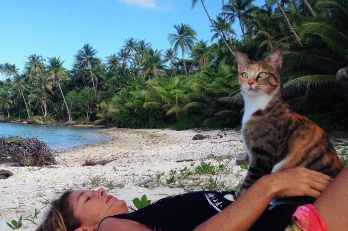 Het reilen en zeilen in het leven van een thuisloze kitten