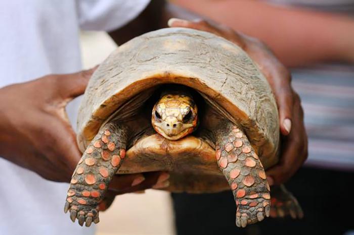 Cette famille retrouve leur tortue 30 ans plus tard !