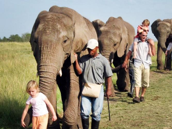 Dans un refuge pour éléphants d'Afrique