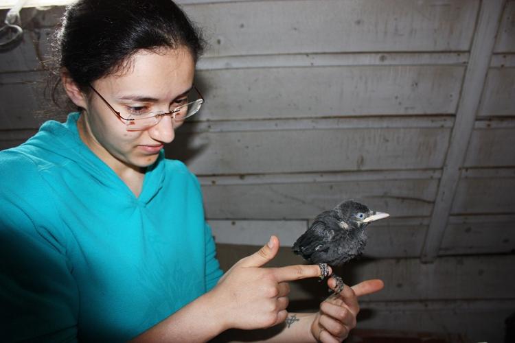 Magdalena recueille un jeune choucas