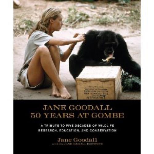 Studie van chimpansees in het Gombe reservaat in Afrika
