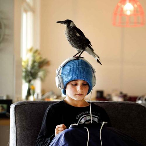 Noah & Penguin / Photo Cameron Bloom