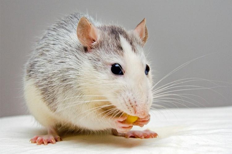 Les petits animaux sont très fragiles