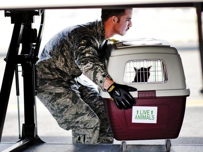 Certains animaux sauvages doivent être transportés avec précaution