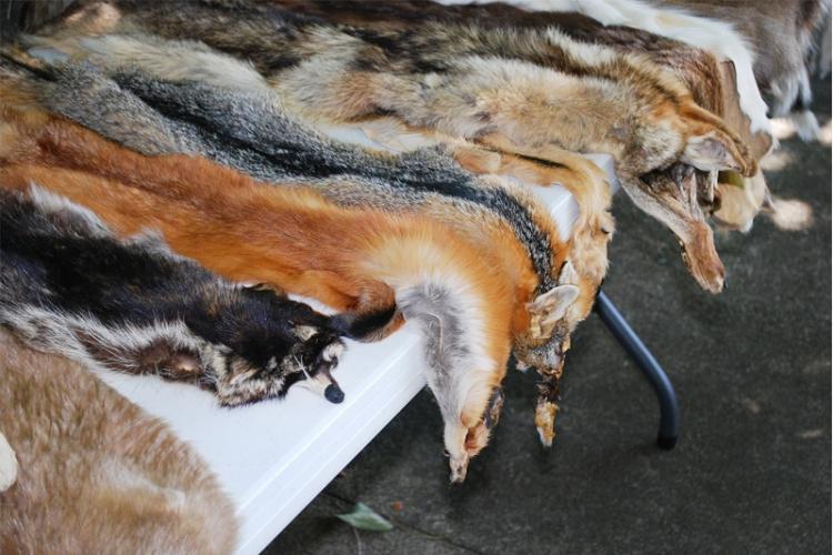 Vacht van dode dieren op een markt