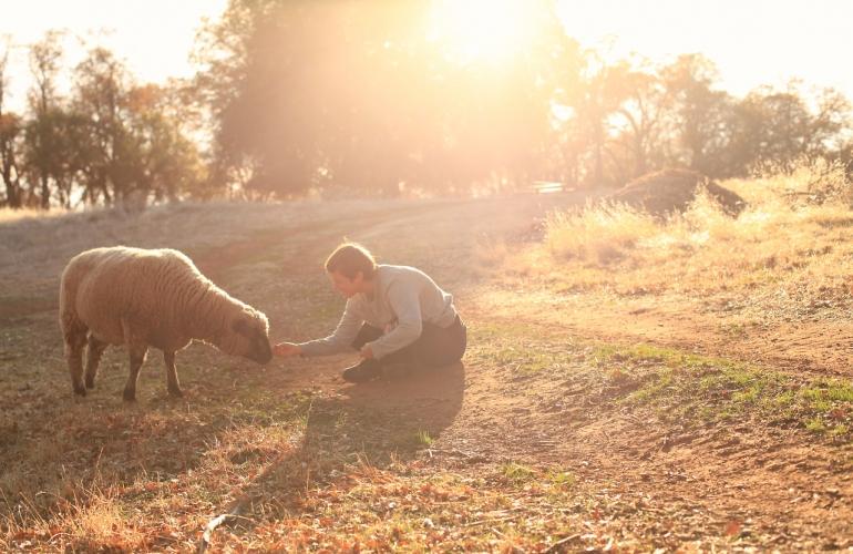 Dans un refuge pour animaux de ferme  /  Photo Andrea White