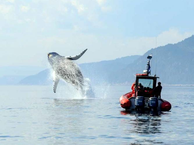 Het observeren van walvissen